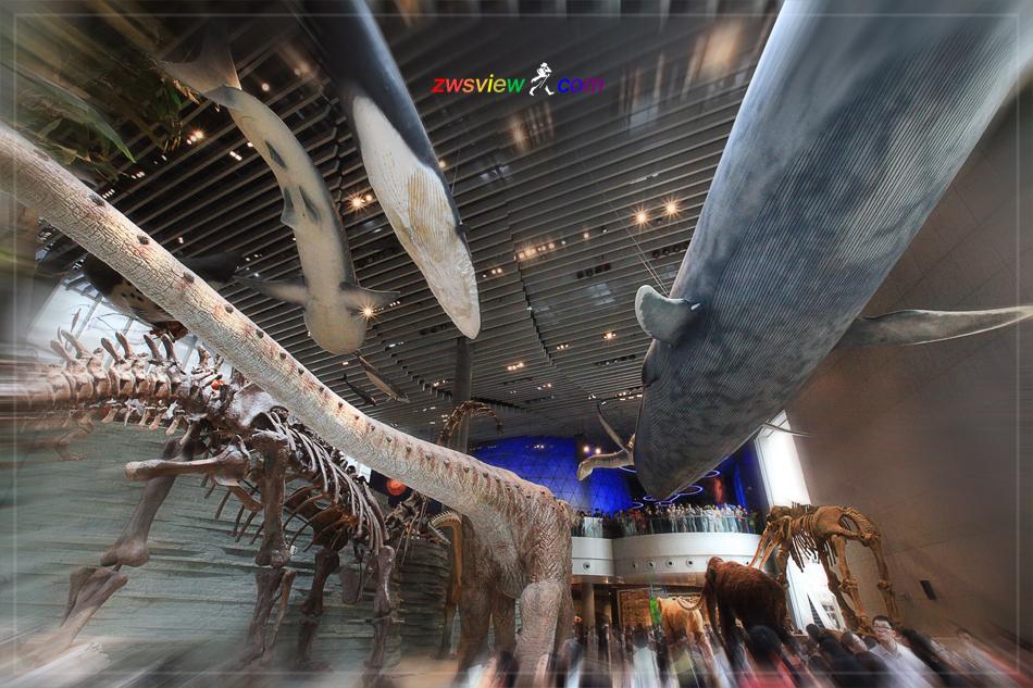 上海自然博物馆的前世今生