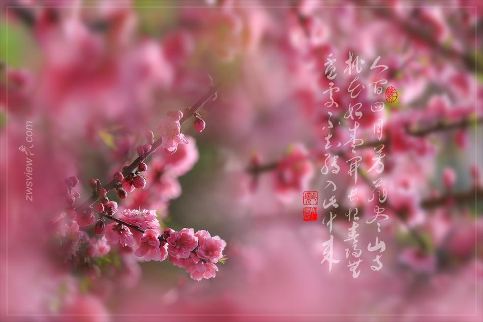 《大林寺桃花》