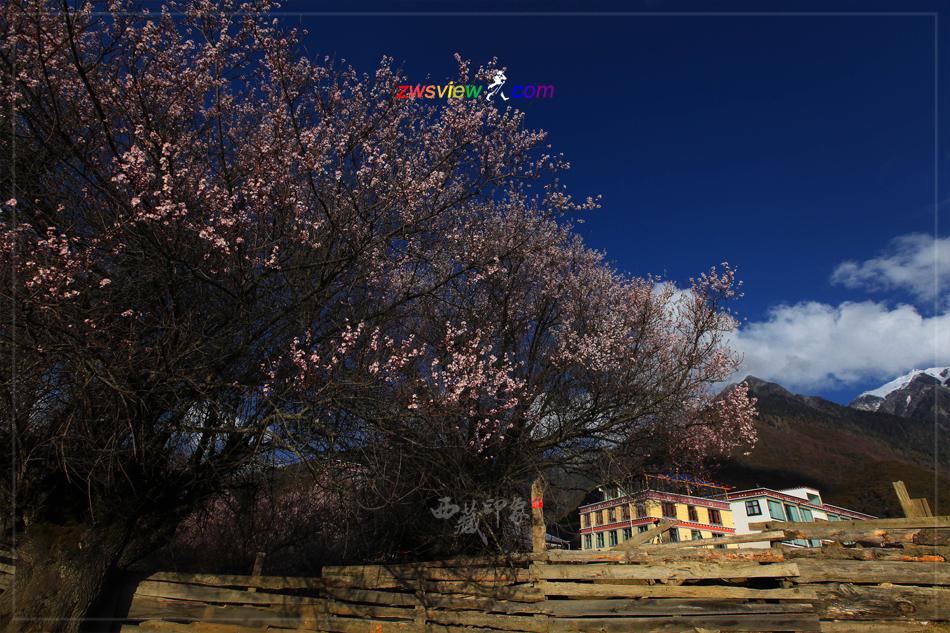 索松村青藏高原上的世外桃源