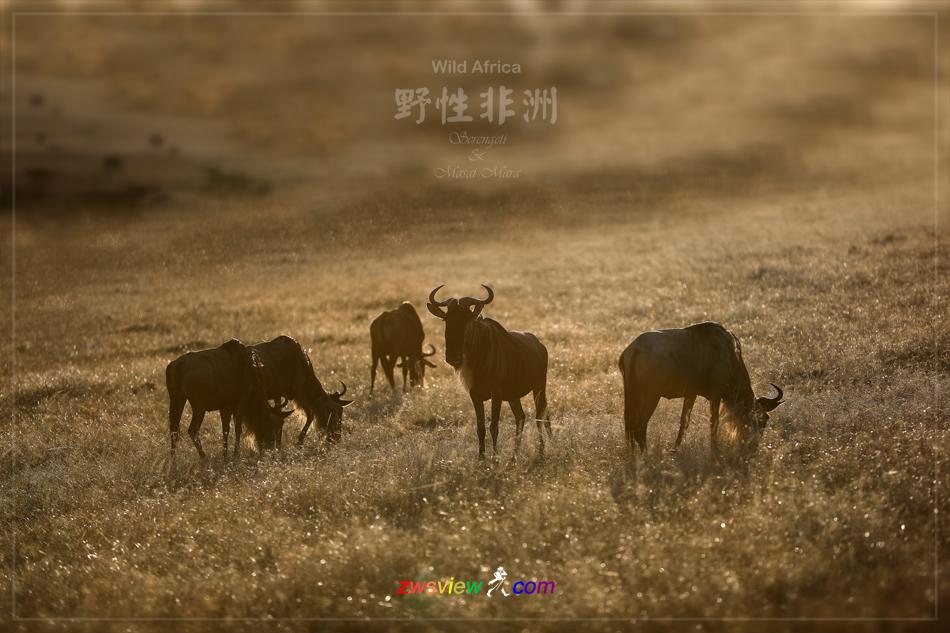 生生不息东非野生动物大迁徙2