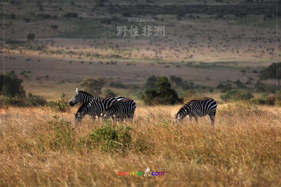 生生不息东非野生动物大迁徙3