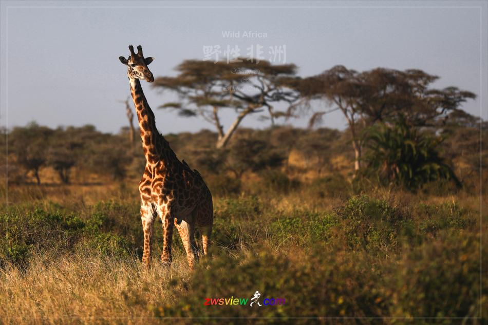 生生不息东非野生动物大迁徙5