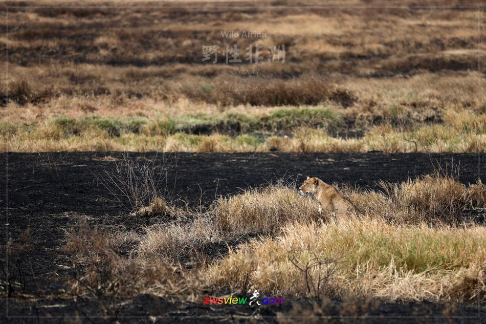 生生不息东非野生动物大迁徙6