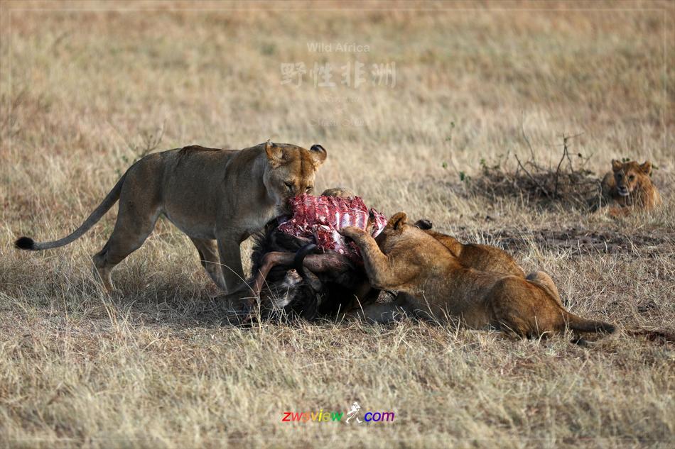 生生不息东非野生动物大迁徙7