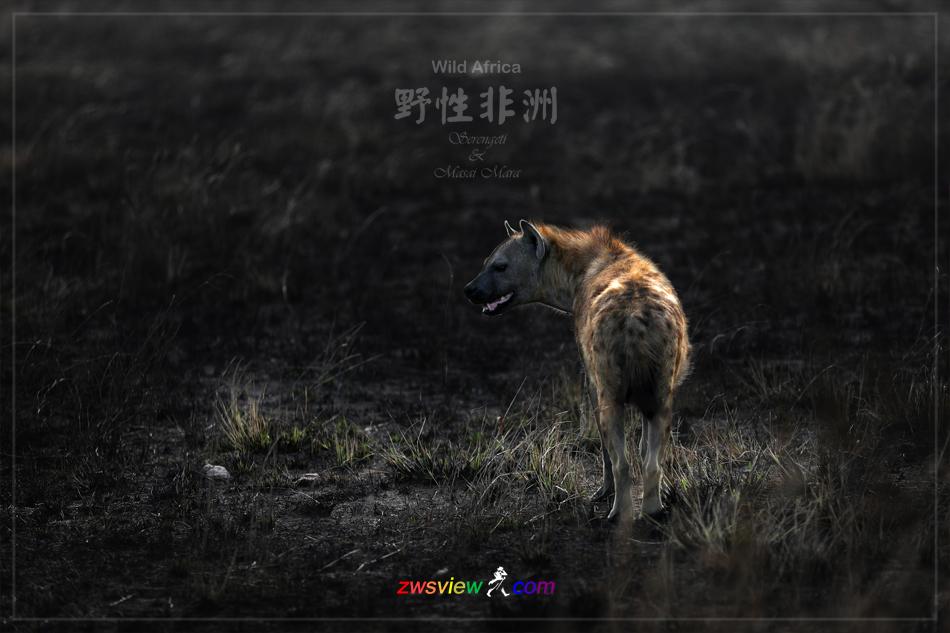生生不息东非野生动物大迁徙8