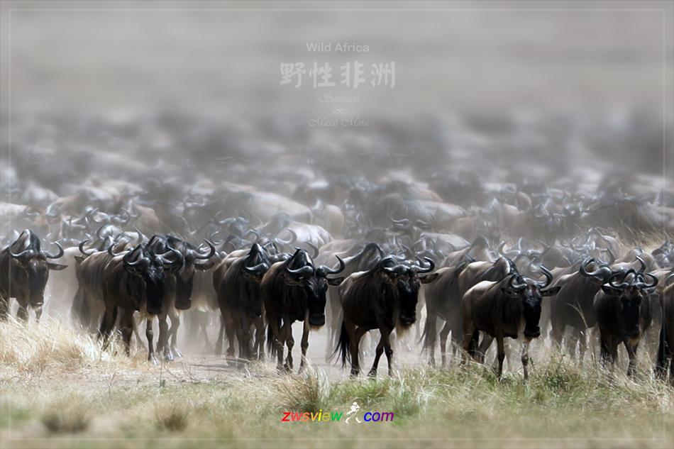 生生不息东非野生动物大迁徙11