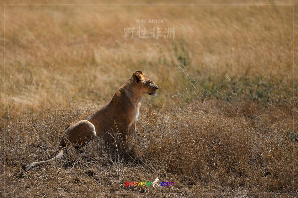 生生不息东非野生动物大迁徙13