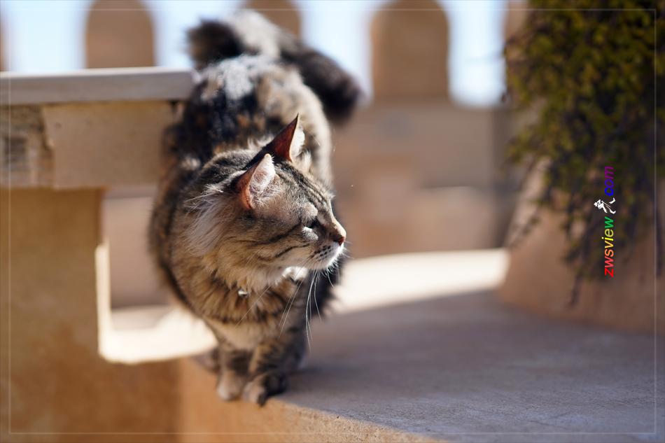 猫穆罕默德的宠物