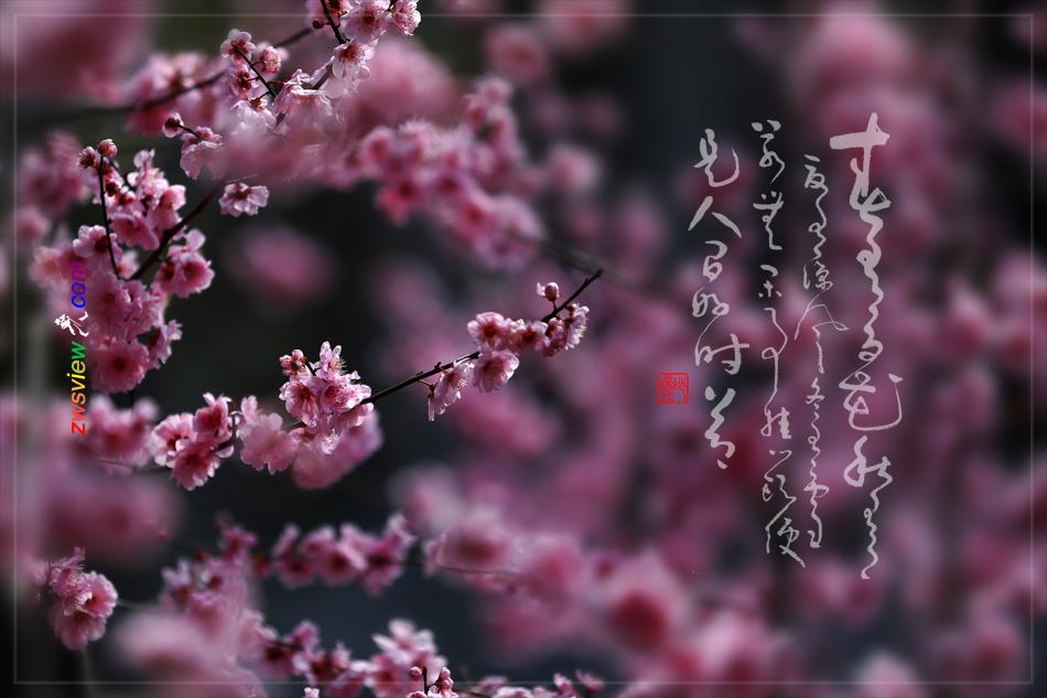 草长莺飞二月天